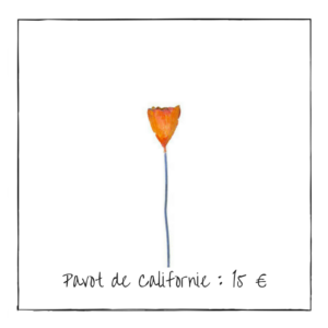 Pavot de Californie : 15 €